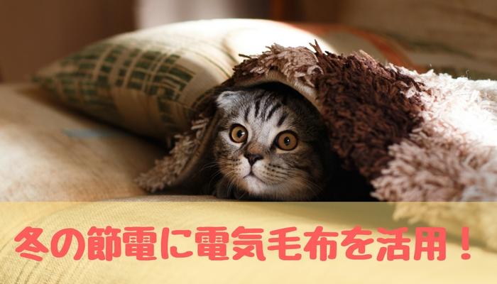 電気毛布でくつろぐ猫